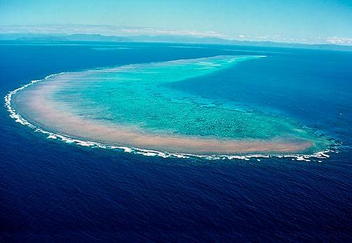 michaelmas reef