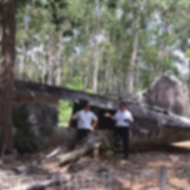Plane Wreck Cape York