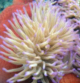 Coral at Lizard Island