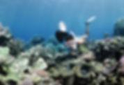 clam garden at Lizard Island