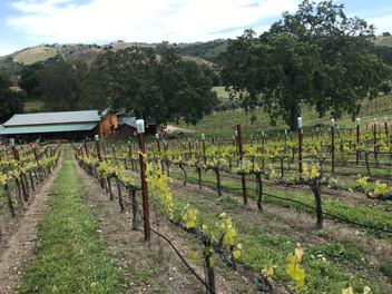 Vineyard Fields   Dubost Winery