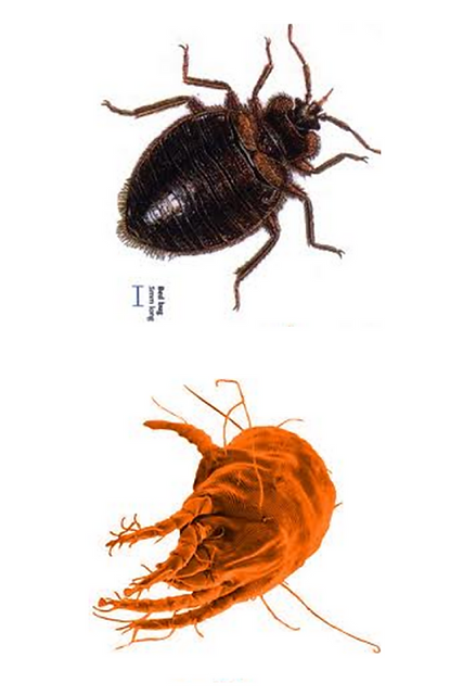 bed-bugs-vs-Dust-mites.png