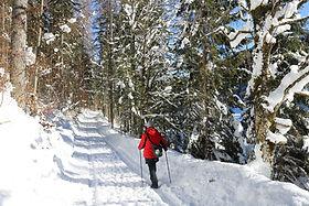 Winter-nordic walking.JPG