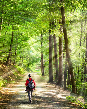 Nordic Walking.jpeg