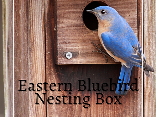Blue Bird House Kit