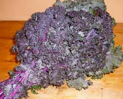 Kale - Red