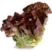 Lettuce REd Buter