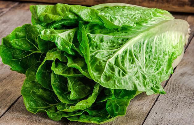 Lettuce Romaine 2