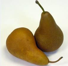 pears - bosc