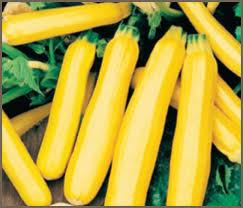 squash - zucchini gold