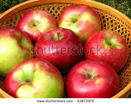 apples - macintosh-6