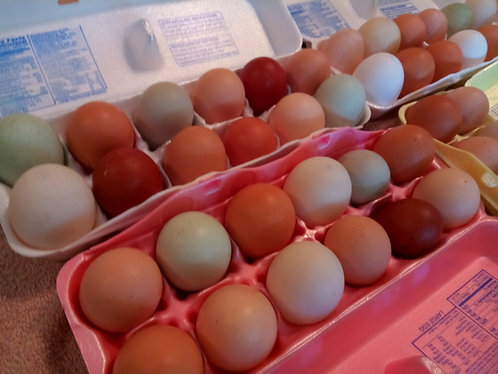 LOCAL Farm Fresh Eggs