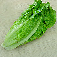 Lettuce Romaine