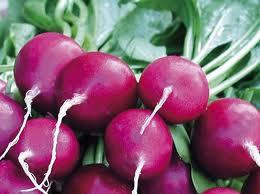 Radish - purple