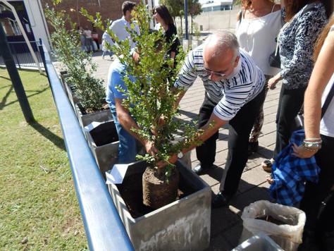 Más árboles en Yom Haatzmaut