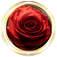 redRose_PackageIcon2.png