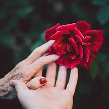 2-female-hands-on-rose.jpg