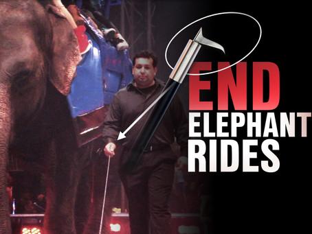 FWC: Ban Elephant Rides In Florida!