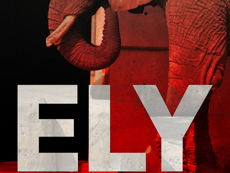 Ely The Elephant Is On The Verge Of Collapse