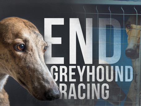 Help us end Greyhound racing Florida!