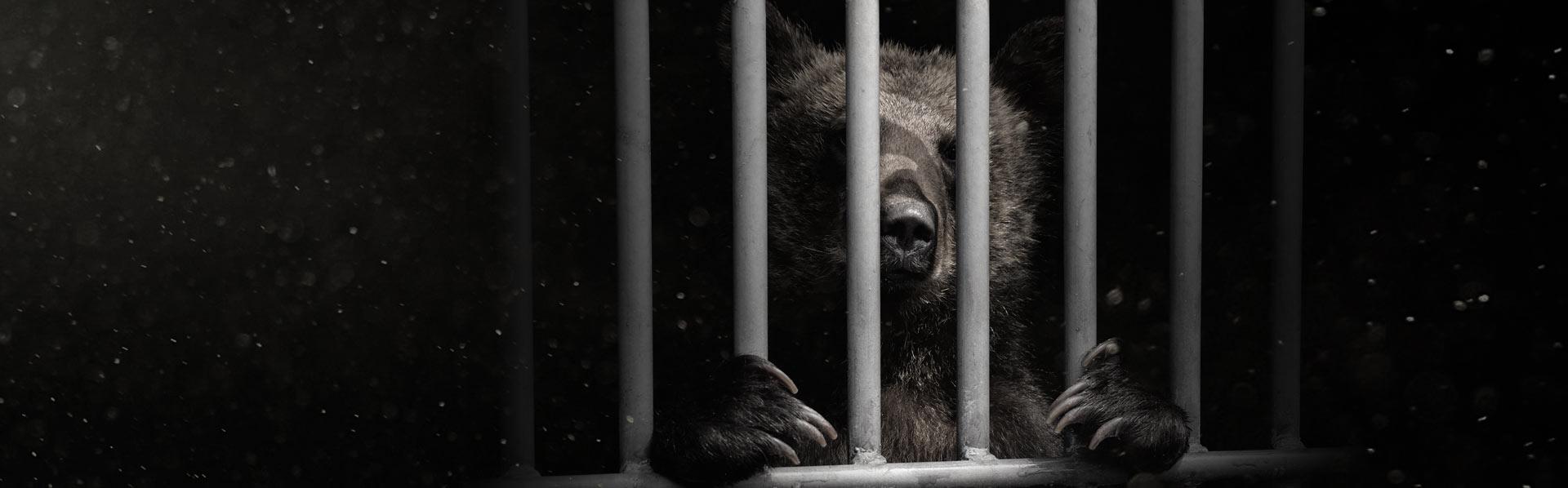 bear_bg_2