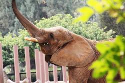 Ely The Elephant Mexico City Zoo