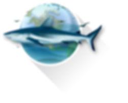 Shark Keep Our Oceans Healthy