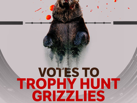 Gov. Mead Signs Off On Wyoming's 1st Grizzly Bear Hunt In 44 Years