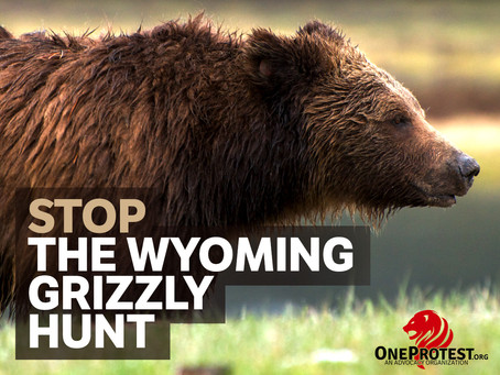 Wyoming Grizzlies Need Your Help!