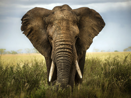 Global Wildlife Trade and why it is detrimental for species survival