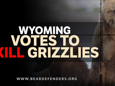 Wyoming Approves Grizzly Bear Trophy Hunt