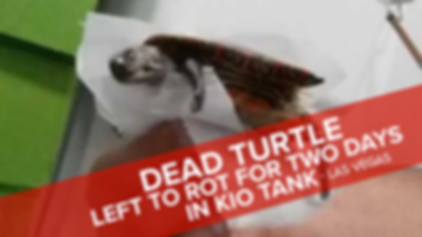 Img_dead_turtle.png