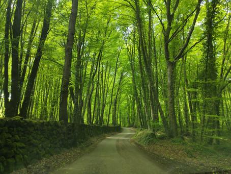 El bosc del Silenci
