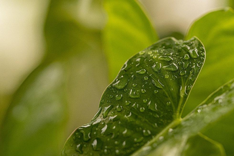leaf-5592392_1280.jpg