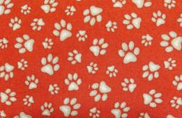 dog red bg and white paws.jpg