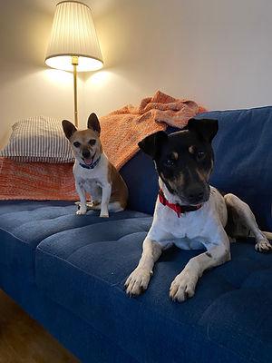 Bella & Pippo sofa.jpg