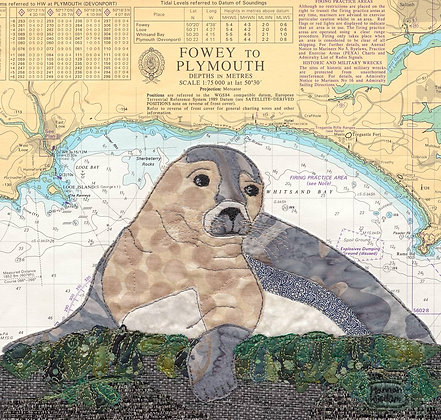 Seal at Looe