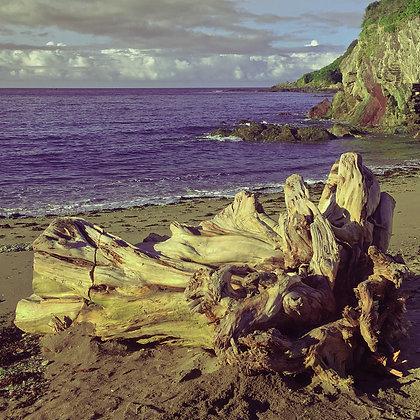Series One Shoreline #3