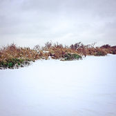 Series One Snowscape #1