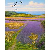 Nanquidno Choughs, Corn Marigolds and Purple Viper's Bugloss