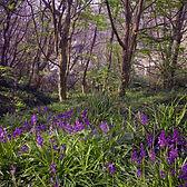 Series One Woodland #2