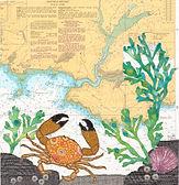 Crab at Wembury Bay