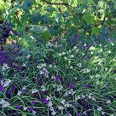 Series One Wildflowers #2
