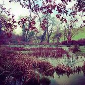Series One Woodland #1