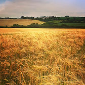 Series One Rural Horizon #2