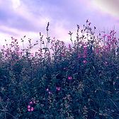 Series One Wildflowers #1