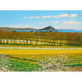 Daffodils And Blackthorn; St Michael's Mount from fields near Gulval