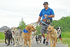 jeff walking the pack.jpg
