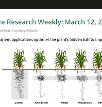 screenshot-plantae.org-2021.03.14-10_04_