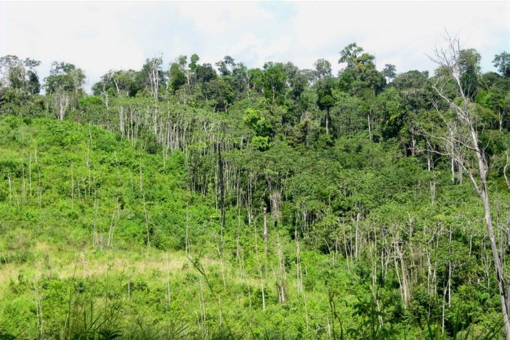 Floresta recuperada